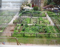 Tour image: Urban farming in green the hague