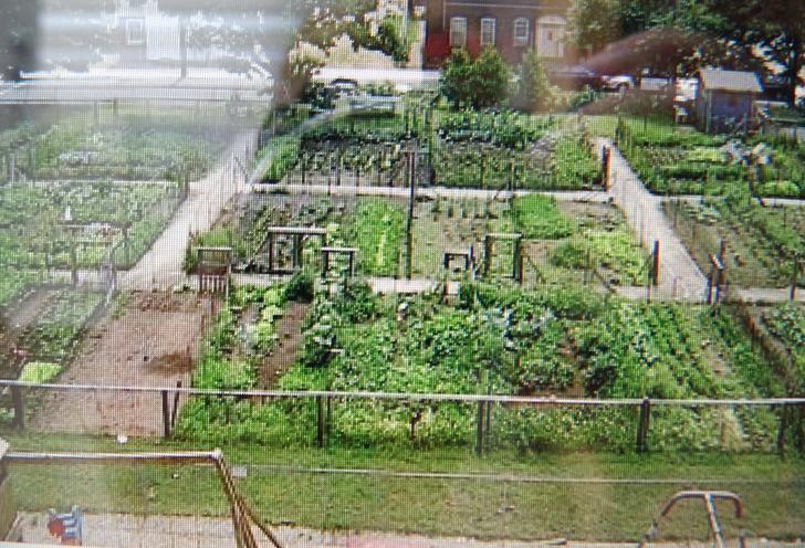 Urban farming in green the hague
