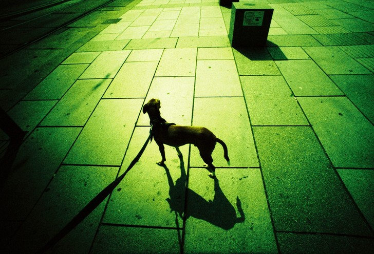 Doggy doggy hey!