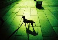 Tour image: Doggy doggy hey!